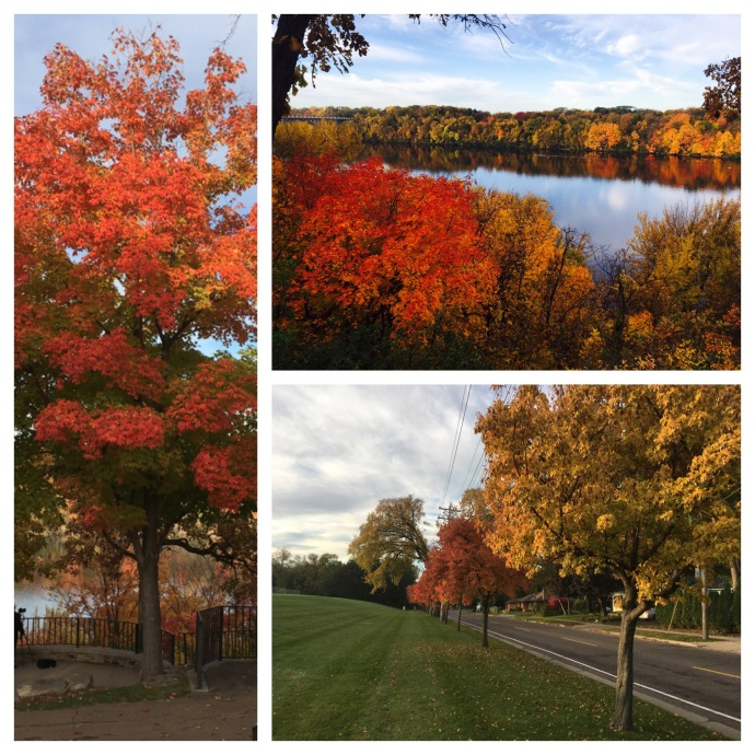 Examples of the fall colors that greeted us in Saint Paul MN
