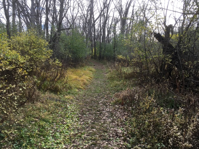 Hiking through the woods at Wild River State Park