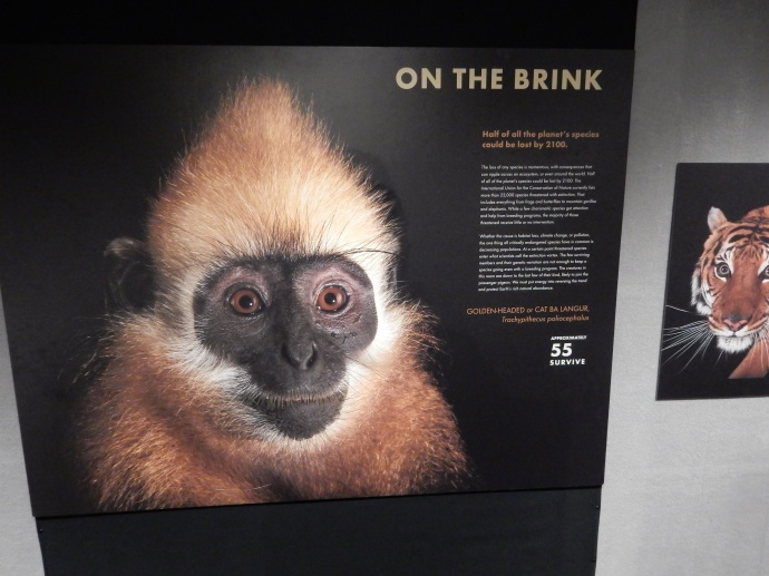 From the National Geographic PhotoArk exhibit