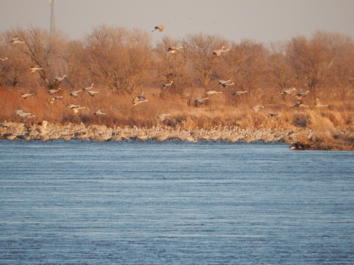 Evening sandhill crane watch on the Platte River